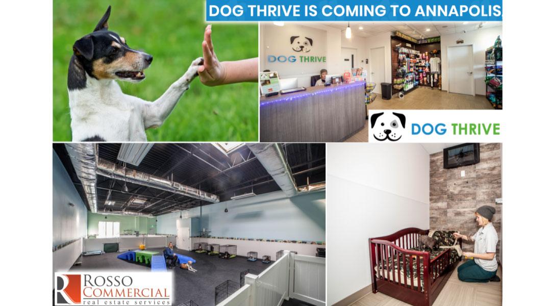 Dog Thrive Case Study